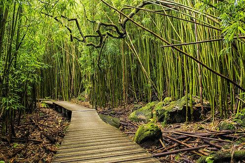 Бамбуковый лес в национальном парке Халеакала - Гаваи