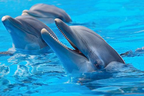 Счастливые дельфины в прозрачной голубой воде