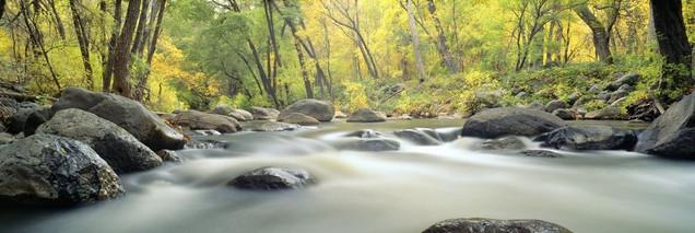 Ручей в хвойном каньоне - Седона, Аризона | #103452920