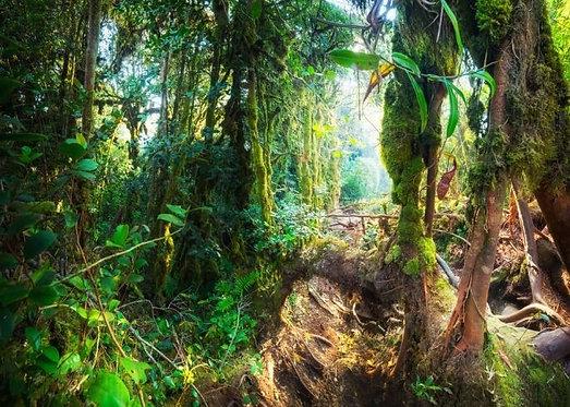 Тропические мшистые джунгли в Малайзии