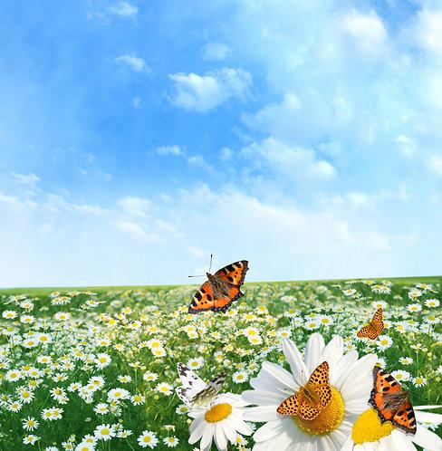 Пейзаж с ромашками и красочными бабочками
