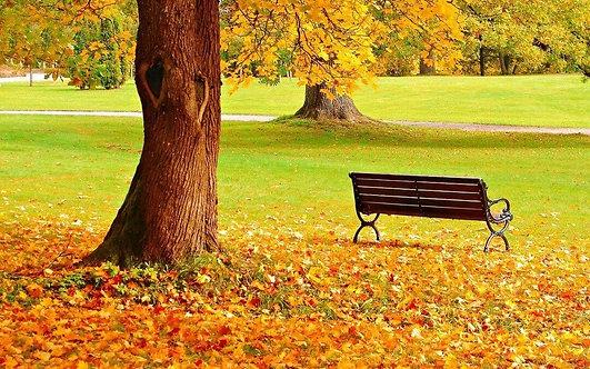 Фотообои. Фрески. Картины. Городской парк. Осень. Скамейка. Листва. Природа