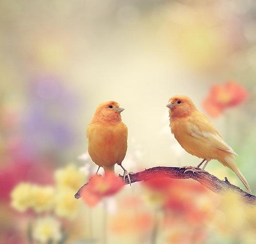 Желтые птички на ветке в саду