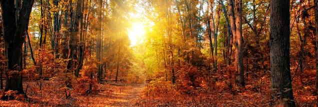 Панорама смешанного леса в осенний солнечный день | #71805688