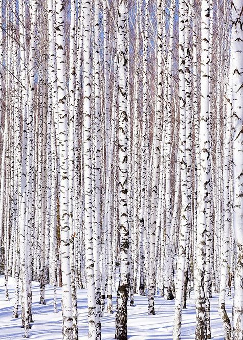 Зимний березовый лес