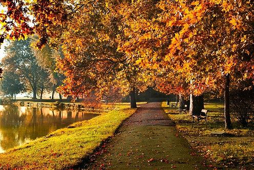 Фотообои. Фрески. Картины. Парковая аллея. Осенний пейзаж. Листва. Пруд. Природа
