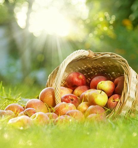 Фотообои. Фрески. Картины. Яблоки в корзине. Зеленая трава. Солнечные лучи