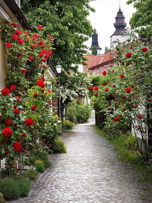 Аллея роз в средневековом городе Висбю. Готланд, Швеция