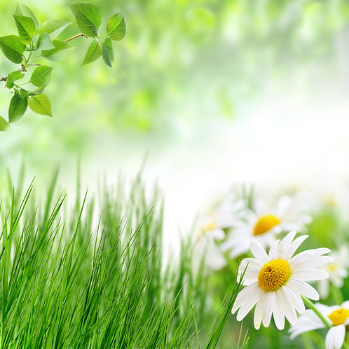 Зеленая трава и полевые ромашки