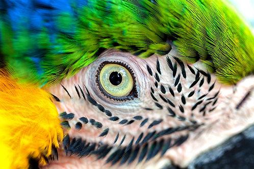 Большой зеленый попугай Ара крупным планом