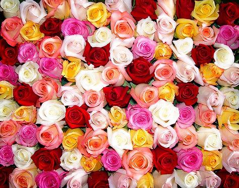 Букет разноцветных роз крупным планом в виде цветочного фона