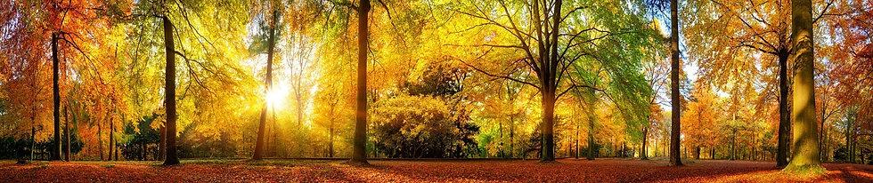 Живописный пейзаж с осенним лесом в теплом солнечном свете
