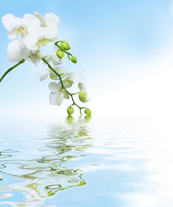Ветка с белыми цветами орхидеи над в водой