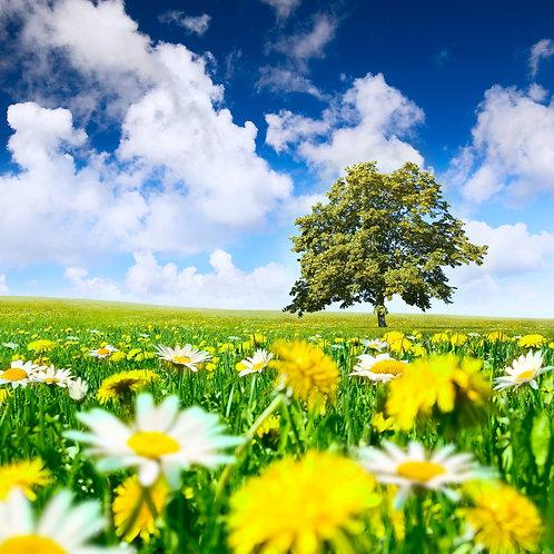 Дерево на лугу с желтыми одуванчиками и белыми ромашками