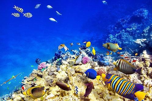 Удивительный подводный мир с кораллами и тропическими рыбами