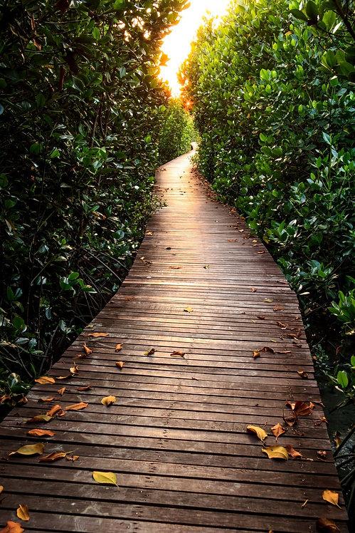 Деревянный мост в мангровом лесу