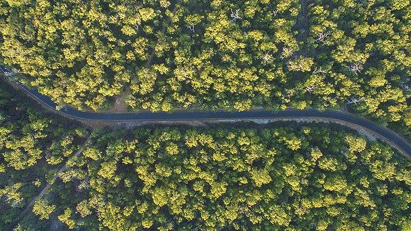 Вид сверху на изгиб дороги в зеленом летнем лесу