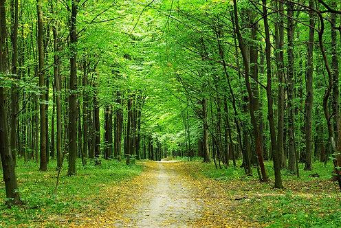 Дорожка в зеленом лесу летом
