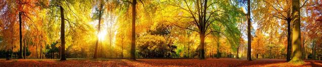 Широкая панорама великолепного осеннего леса - живописный пейзаж с приятным теплым солнцем | #476416021