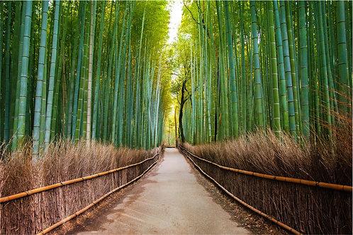 Тропа в бамбуковом лесу в Арасияма - Киото - Япония