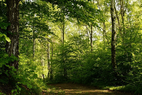 Тропинка в весеннем лесу