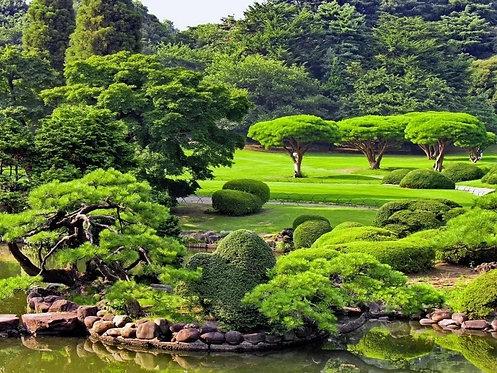 Фотообои. Фрески. Картины. Японский зеленый парк летом. Пруд. Природа и пейзажи