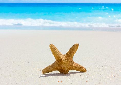 Морская звезда на песчаном серф-пляже