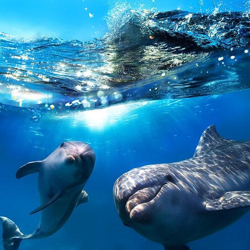 Два дельфина под водой и брызги волны над ними