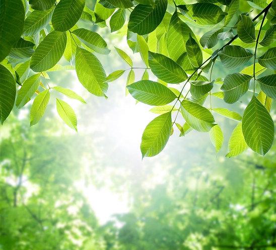 Зеленые листья весеннего леса в солнечном свете
