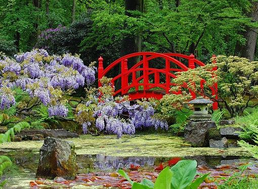 Фотообои. Фрески. Картины. Японский сад. Цветы. Пруд. Камни. Красный мостик