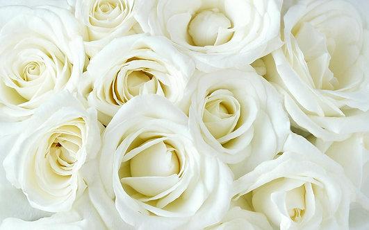 Нежные белые розы в виде цветочного фона