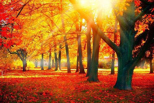Фотообои. Фрески. Картины. Осенний парк. Деревья и листья. Солнечные лучи