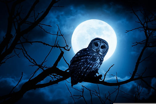 Сова крупным планом ночью на фоне яркой луны