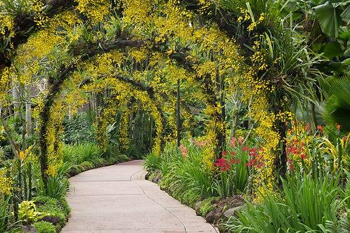 Фотообои. Фрески. Картины. Ботанический сад. Орхидеи. Цветочные арки. Природа