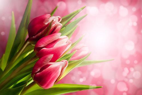 Красные тюльпаны на розовом размытом фоне