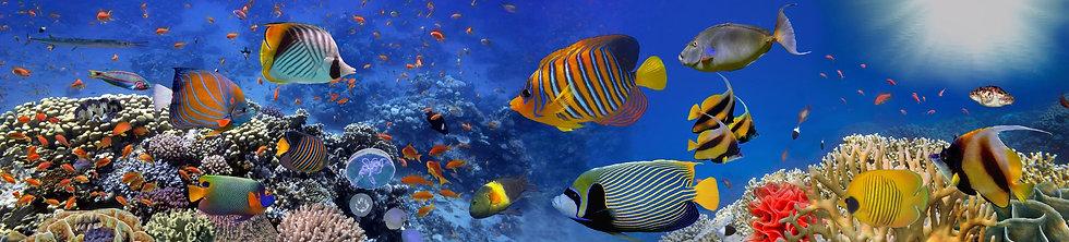 Подводный панорамный вид кораллового рифа