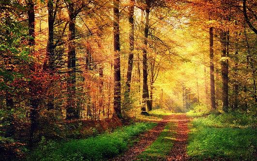 Пейзаж с осенним лесом с золотой листвой и дорожкой