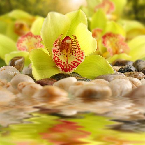 Цветы желтой орхидеи на камнях крупным планом
