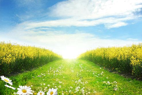 Живописный пейзаж с полевыми ромашками
