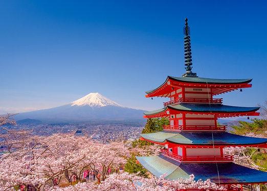 Пейзаж с цветущей сакурой на фоне горы Фудзи и красной пагоды Chureito