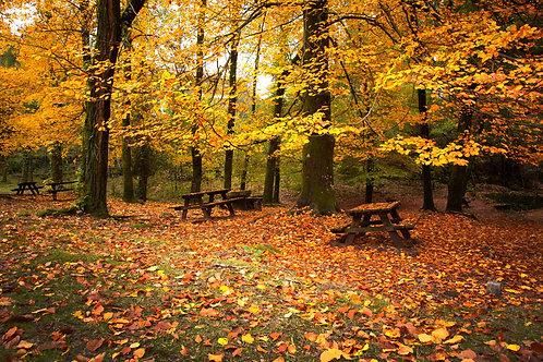Фотообои. Фрески. Картины. Осенний пейзаж. Деревья. Листва. Скамейки. Природа