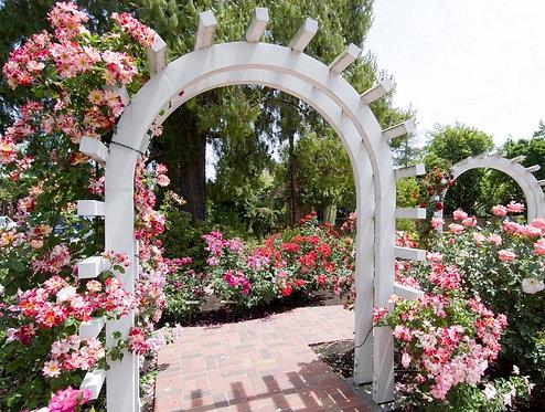 Домашний сад Лютера Бёрбанка с белыми арками в США