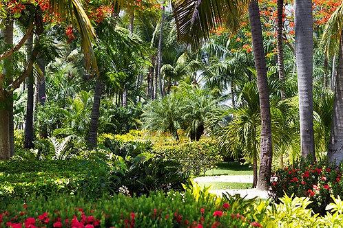 Фотообои. Фрески. Картины. Тропический сад. Пальмы. Цветы. Природа и пейзажи