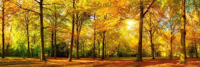 Великолепный осенний пейзаж - панорама живописного леса в лучах теплого солнечного света | #308091494