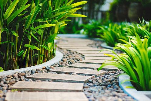 Фотообои. Фрески. Картины. Садовая дорожка. Тропический сад. Природа. Таиланд