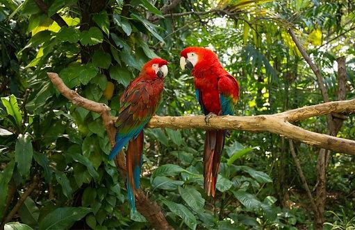 Два попугая на ветке в джунглях. Майами, Флорида