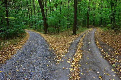 Развилка сельской дороги в лесу