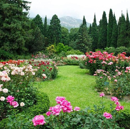 Фотообои. Фрески. Картины. Сад с розами. Цветы. Деревья. Природа и пейзажи