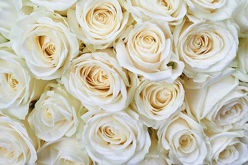 Белые розы в виде цветочного фона