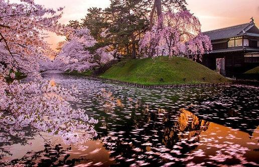 Сакура и знаменитый замок в Аомори - Япония